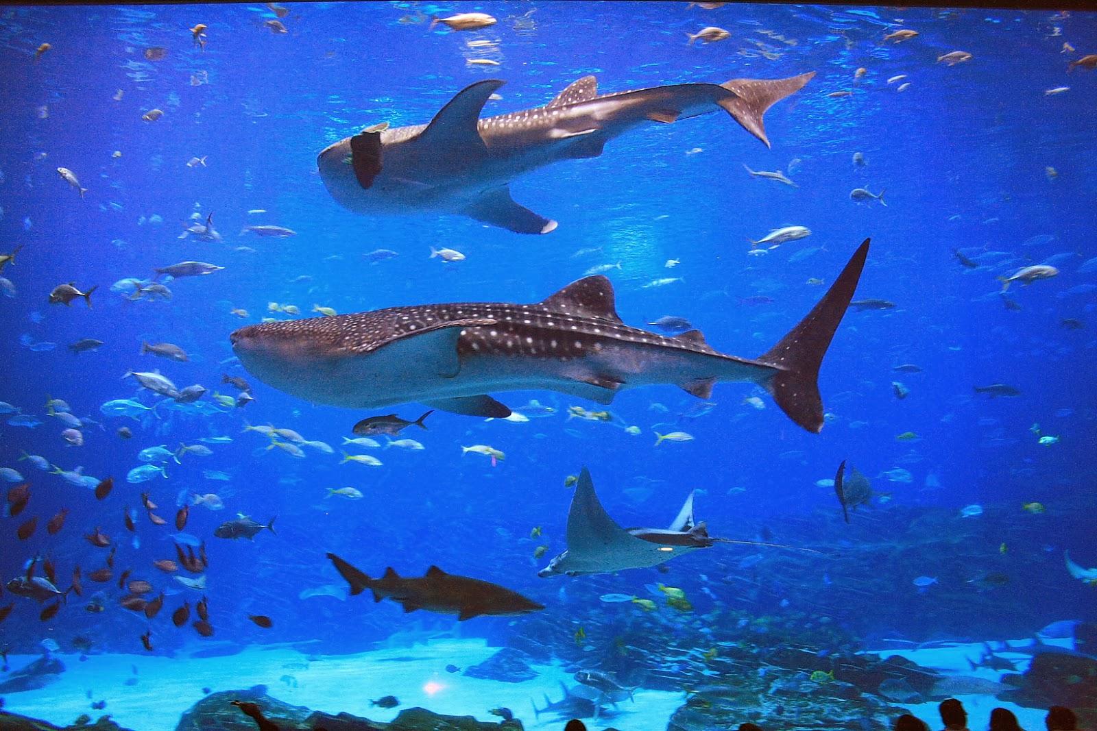 World's Largest Aquarium - Georgia Aquarium   Craziest ...
